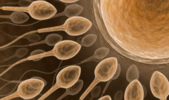 Anabolic steroids, fertility and contraception